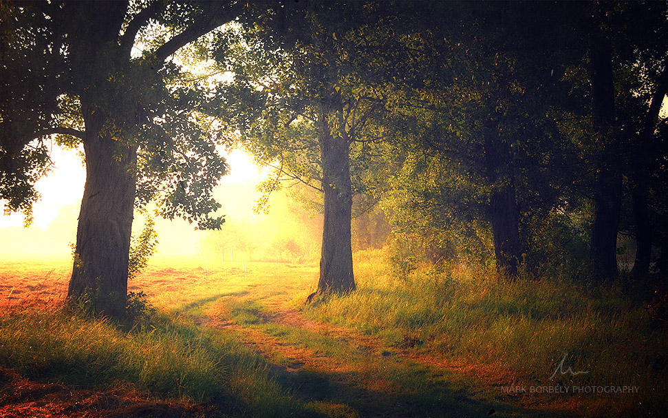 Delightful Dream by markborbely