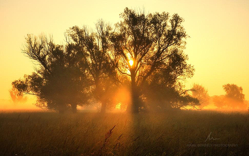 Awakening by markborbely