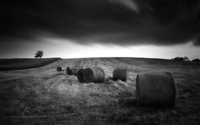 Silent Rebels by markborbely