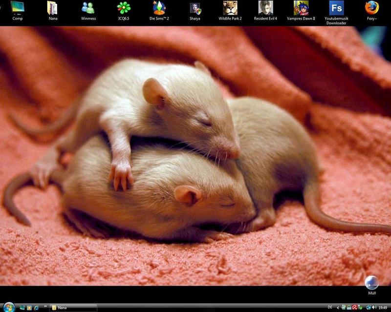 Cute baby rats - photo#18