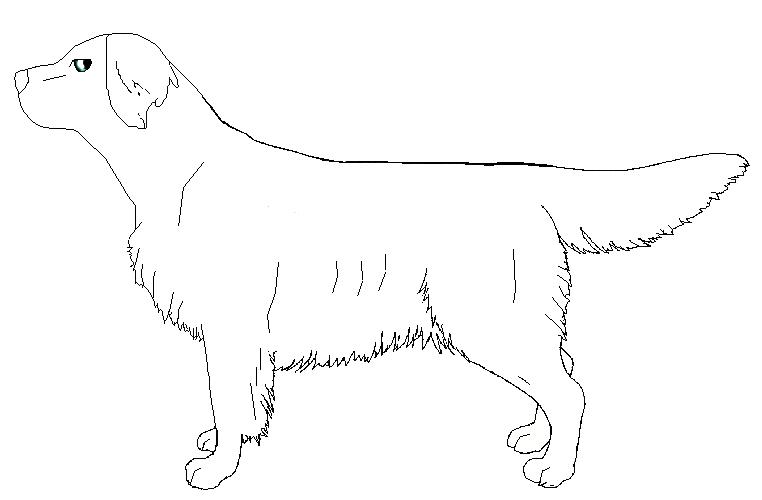Line Drawing Golden Retriever : Golden retriever outline by j dove on deviantart
