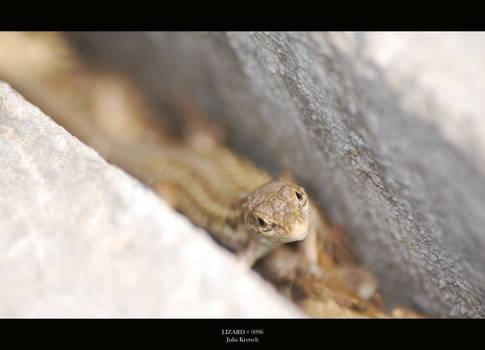 Lizard 0096