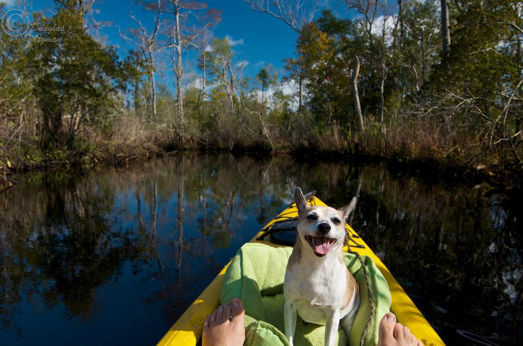 Happy Dog by MarshExplorer
