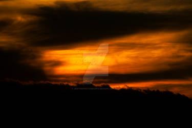 sunset bird storm