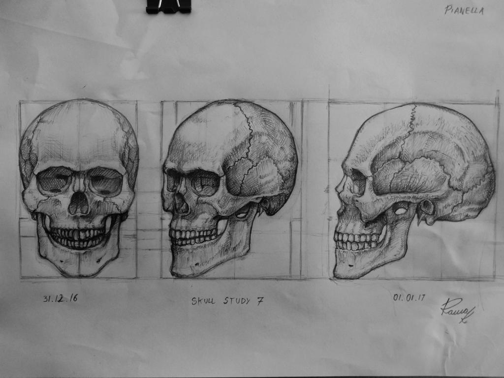 Skull study 7 by Kriscorpion