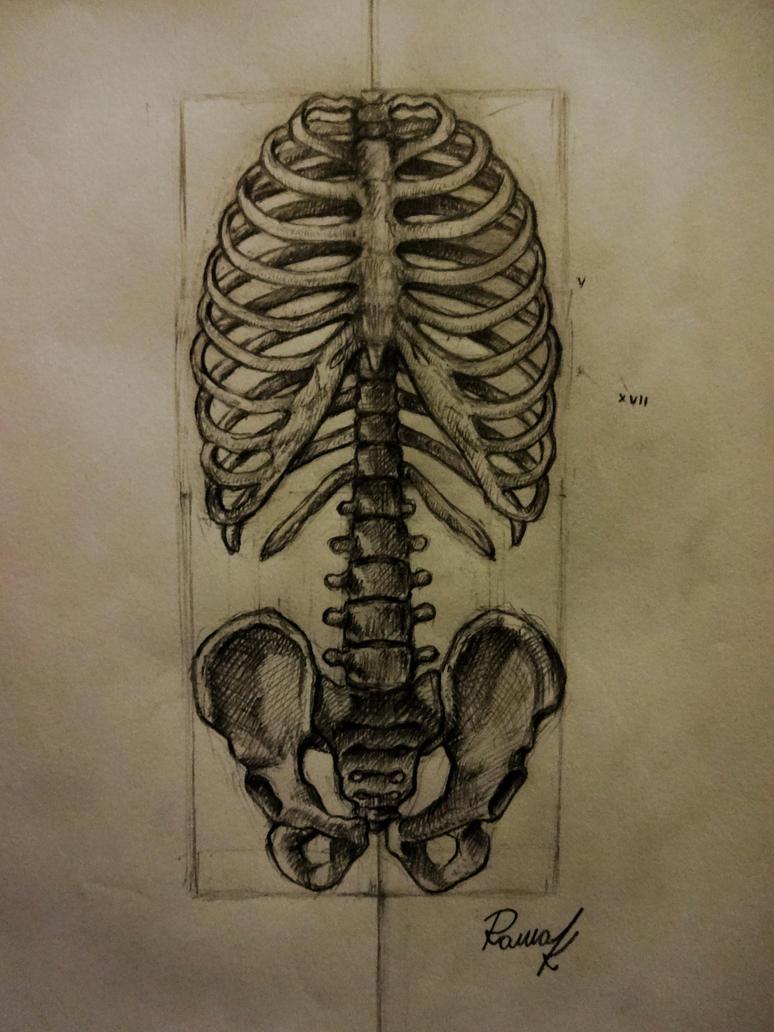 Anatomy study by Kriscorpion
