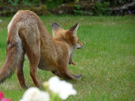 Tail 'n' Butt 'n' Yawn
