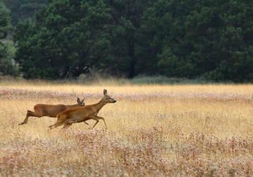 Deers by KBJ-77