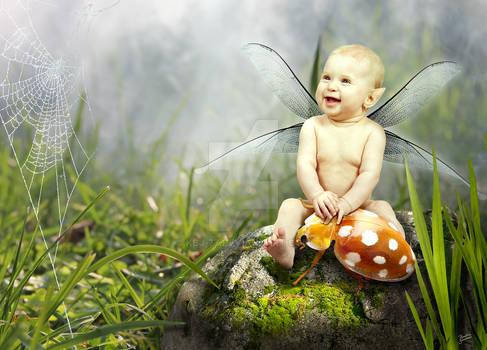 Pet Beetle