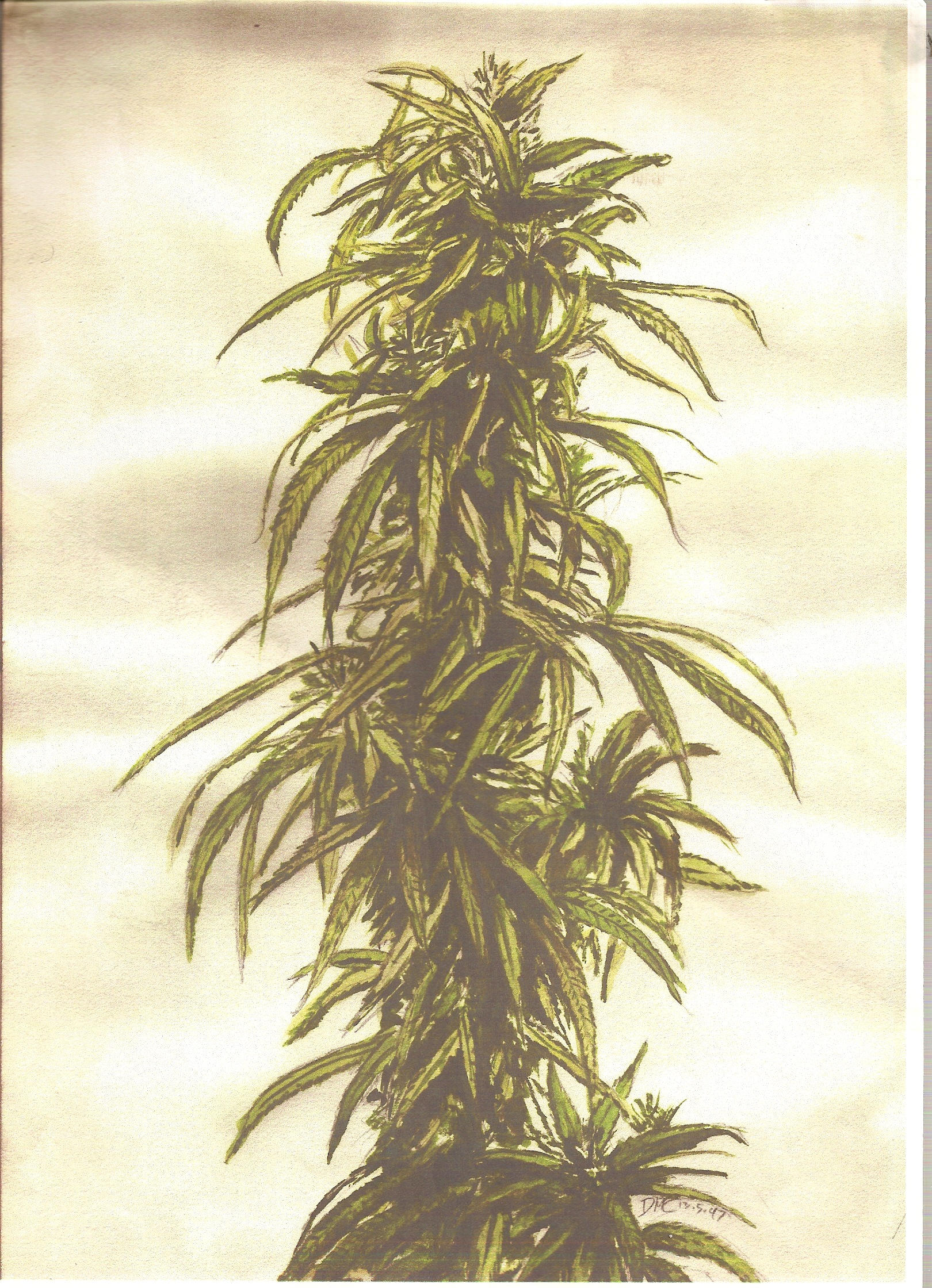 Weed Plant Drawing - Cliparts.co |Weed Plant Drawings