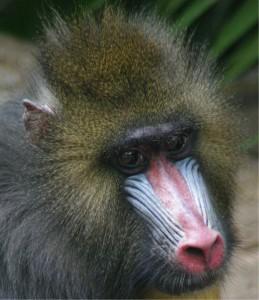 Althalore's Profile Picture
