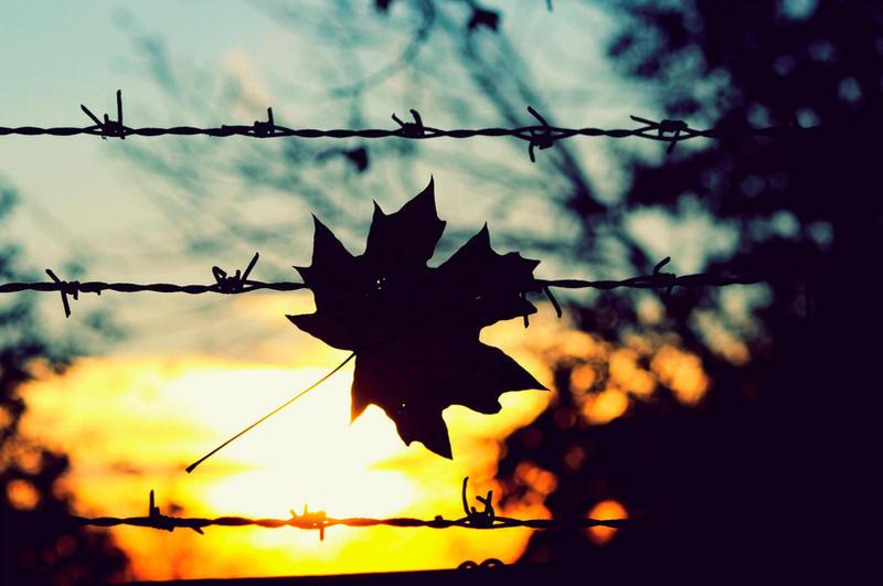 november sunset by ElenaCute on DeviantArt | title | sunset in november