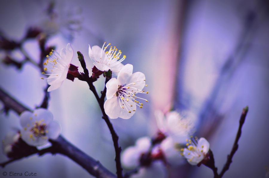 end of spring by ElenaCute