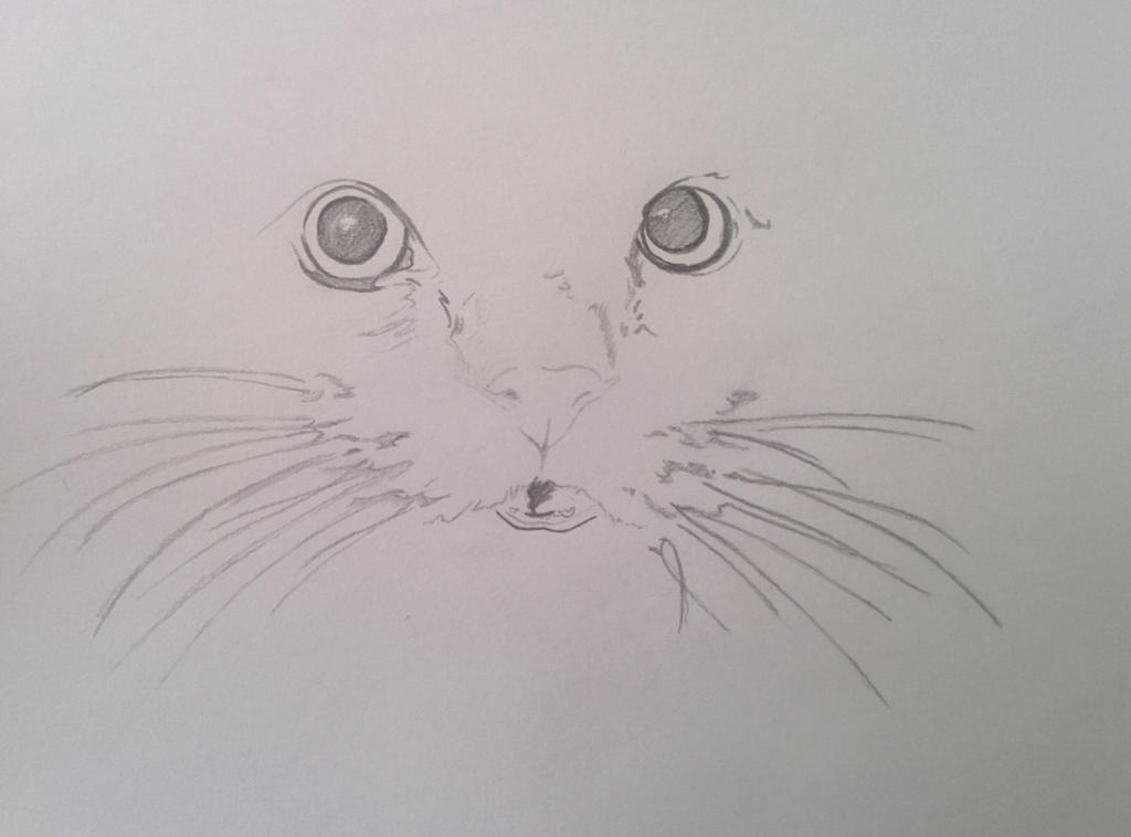 My Cat [ unfinished ]  by Vegan33