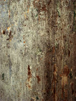 Pitted Wood by pendlestock