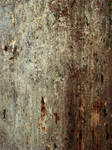 Pitted Wood