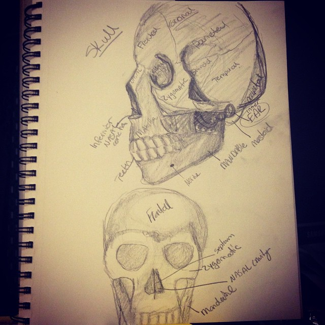 Anatomy Practice- Skull by Jocyhope