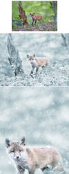 Snowy 2 Photoshop Action by GraphicAssets