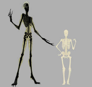 CR Reference: Skeleton with human comparison