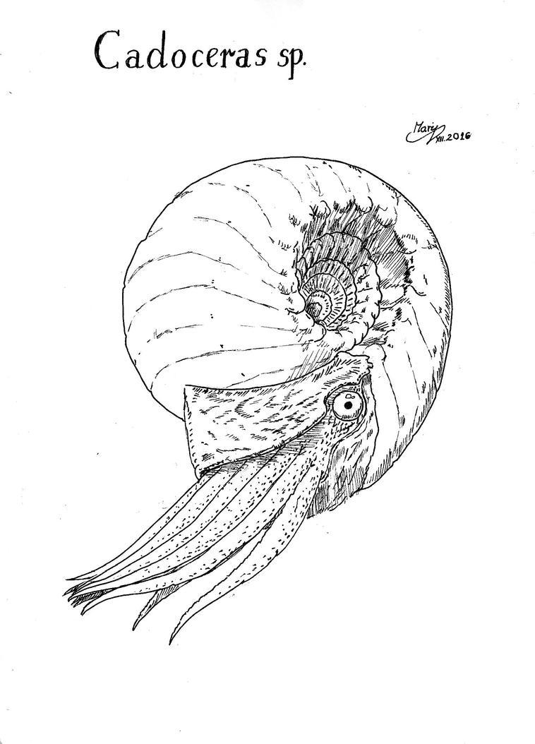 Ammonite by Silvanoxia