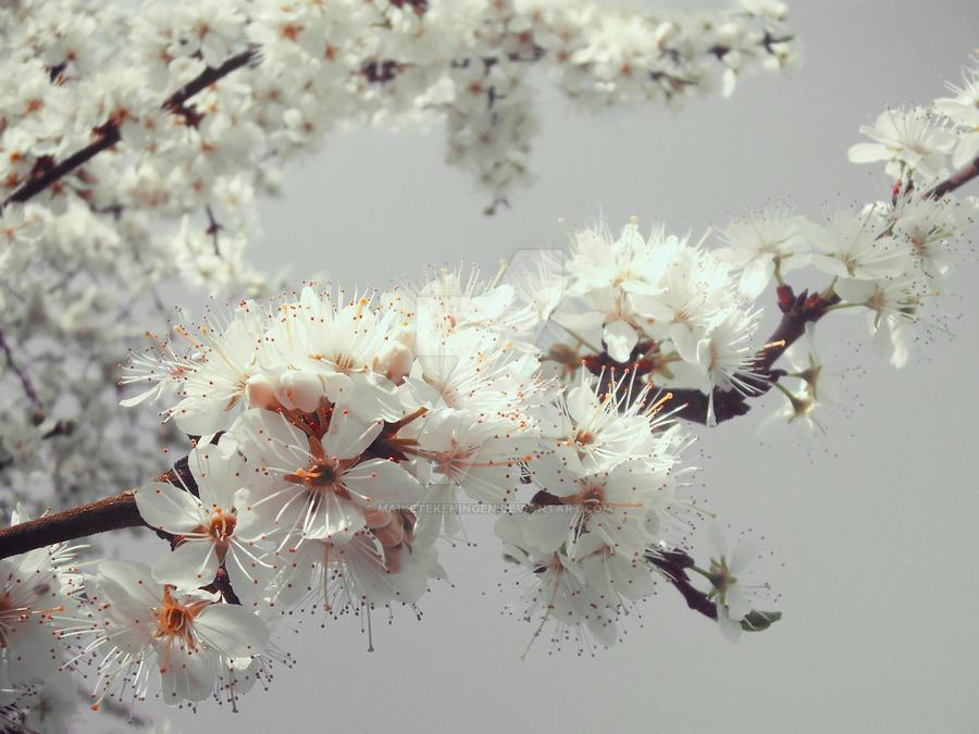 White Blossom by maiketekeningen