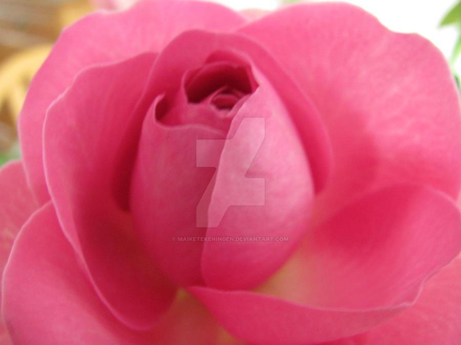 Pink rose by maiketekeningen