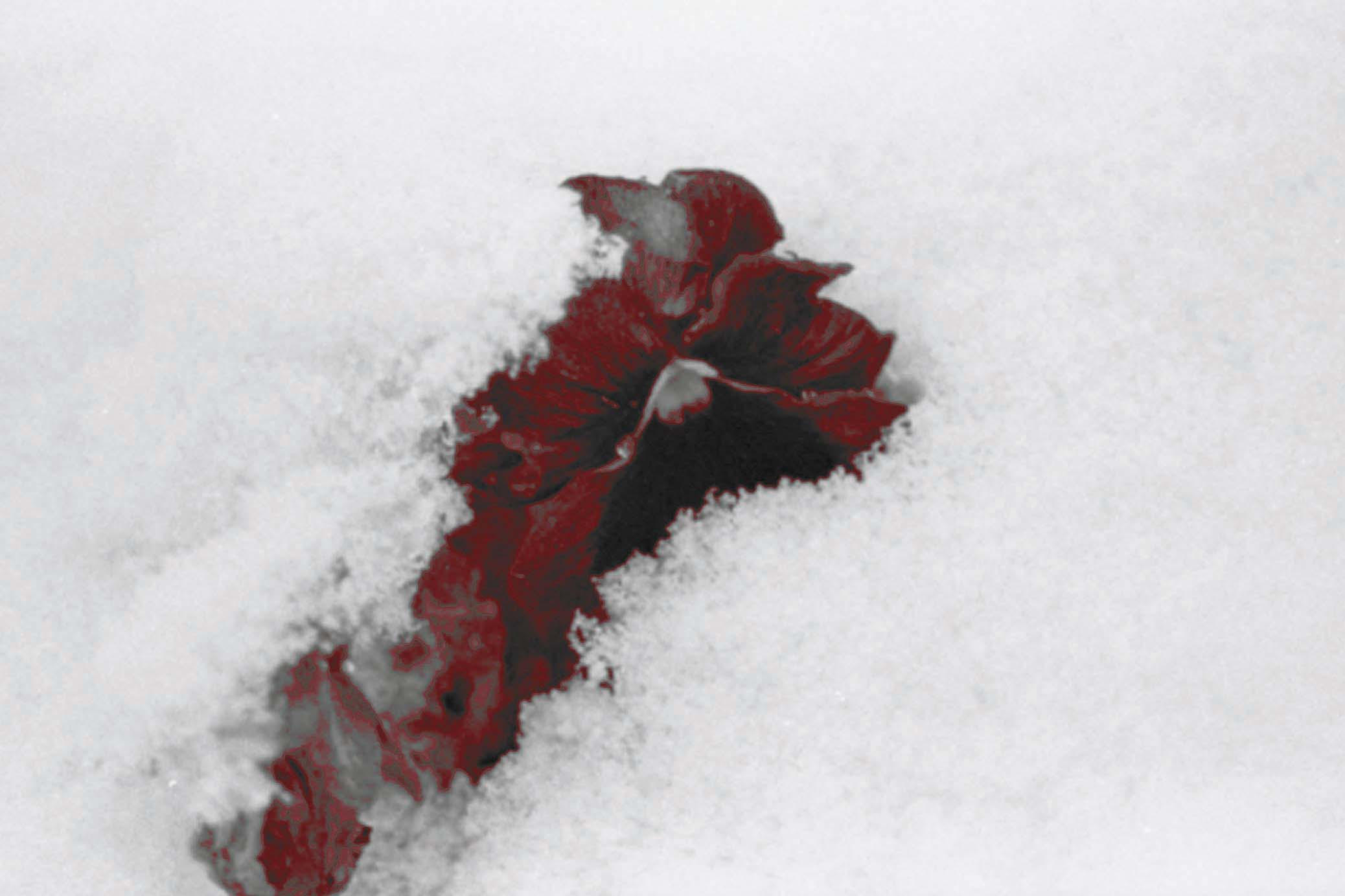 Blood in the Snow--Trial by SadinaSaphrite