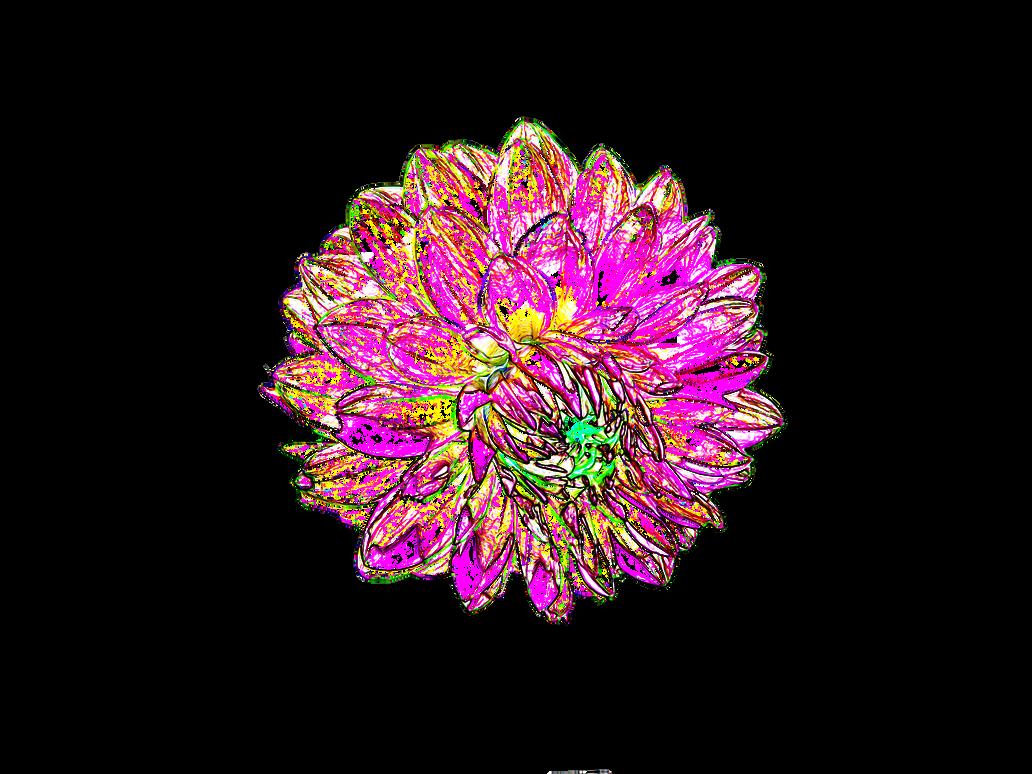 Eleletsitz: Transparent Black And White Flowers Tumblr Images