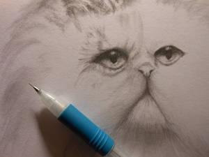 Cat Commission WIP