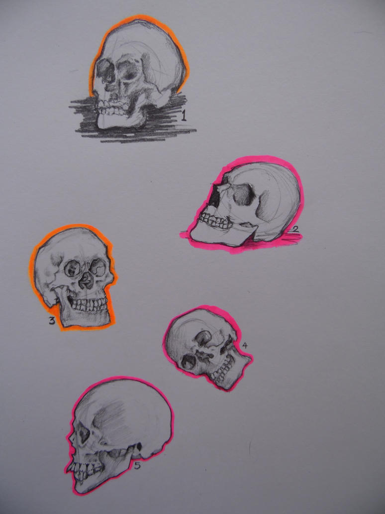 Skull study by YouMePencilPaper