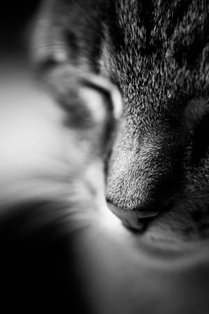Tommy the cat by schneids
