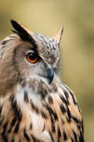 eagle owl by schneids
