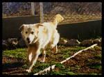 Dog -  Djina by NaViGa7or