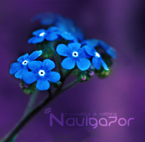 Blue flower by ~NaViGa7or