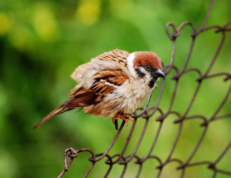 雀の網画像
