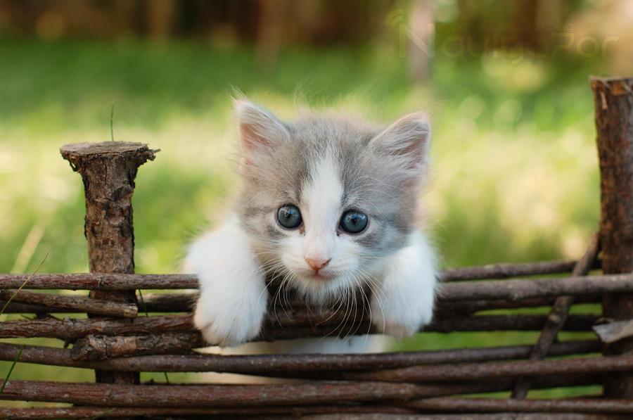cool kitten by NaViGa7or