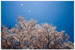 Cherry Snow by annunaki