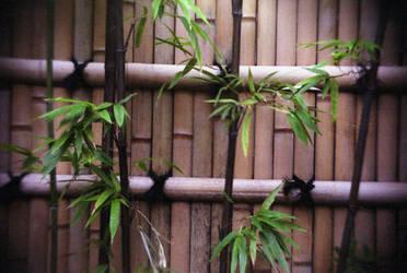 Little Edo Bamboo by annunaki