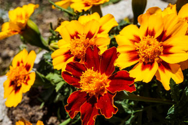 Flowers from my garden - 2