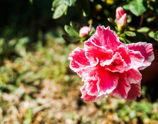 Flowers from my garden - 16