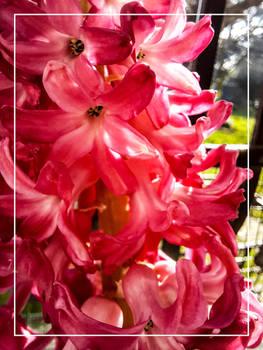 Flowers from my garden - 18