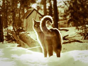 sparkly cat