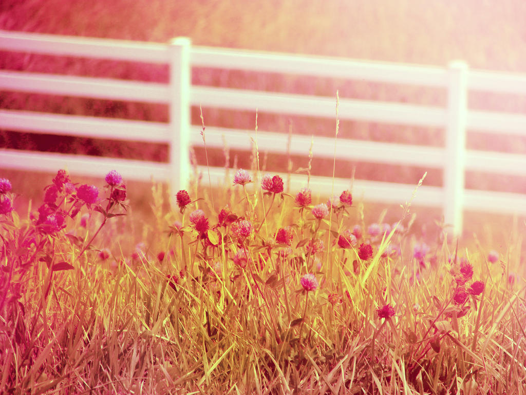Country Summer Photography Wallpapers Background