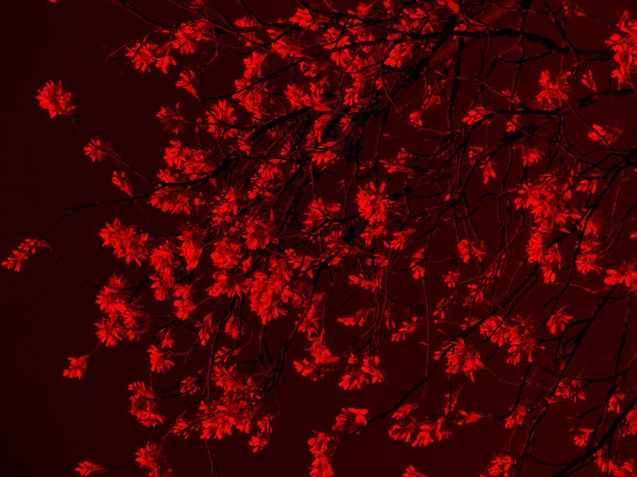 red blood black sand pdf