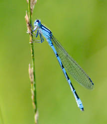 Colourful Dragonfly