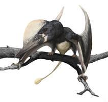 Kunpengopterus antipollicatus