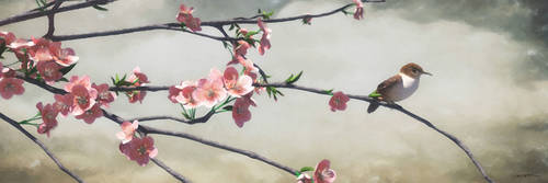 Apple Blossoms by curious3d