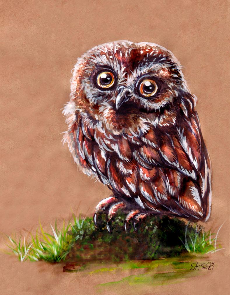 little owl by Taleea