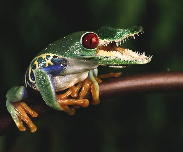 Killer frog by Freewhiler on deviantART