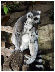 Lemur 4 by Art-By-Anders
